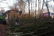 Bomen kappen in Apeldoorn