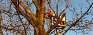 Bomen snoeien door Passie voor groen